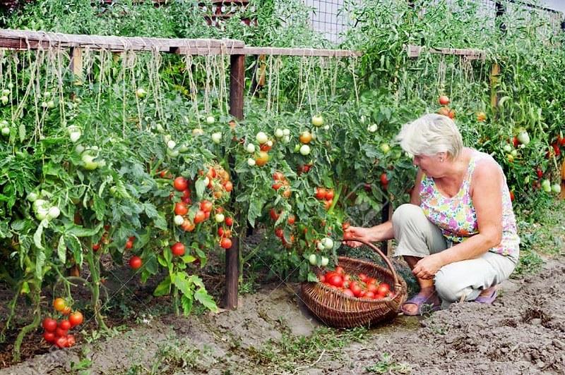Comisión Agropecuaria estudia la Ley de Agricultura Familiar
